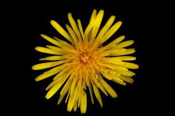 Bloemen van Rick Biermans