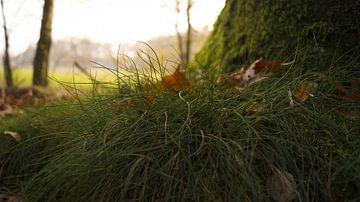 Gras von Esmée Kiezebrink