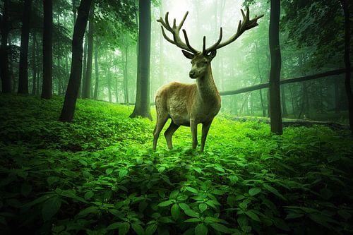 Gro�er Hirsch im grünen Zauberwald