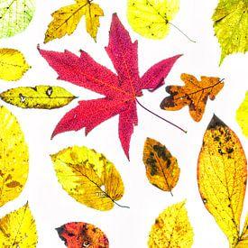 Kleurige herfstbladeren met een witte achtergrond van Carola Schellekens