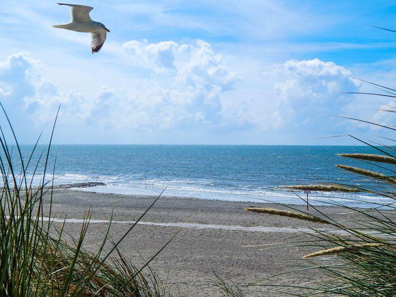 Neugierige Möwe an der Nordseeküste auf Borkum
