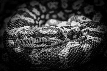 Schlauch schwarz weiß Nahaufnahme von Faucon Alexis