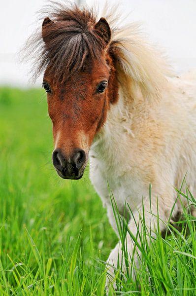 Pony poster van Atelier Liesjes