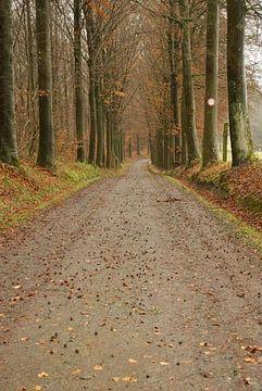 bos van shannon van deursen