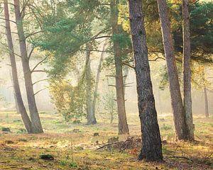 Magisch licht in het bos, Utrechtse Heuvelrug, Nederland van Sjaak den Breeje Landschapsfotografie
