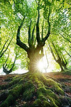 L'arbre sur Franziska Jungen