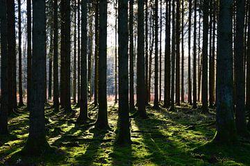 Bäume im Licht und Schatten von Susanne Seidel