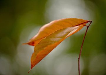 Herfstblad  in bokeh cirkel van