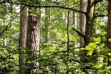 doorkijkje tussen de bomen zie je het bos van Eric van Nieuwland