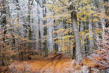 Begin van de winter op een herfstige bosweg met kleurrijk gebladerte en witte rijp op de boomtakken van Maren Winter