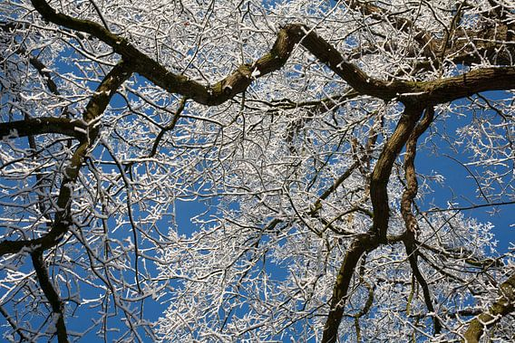 Heldere winterdag