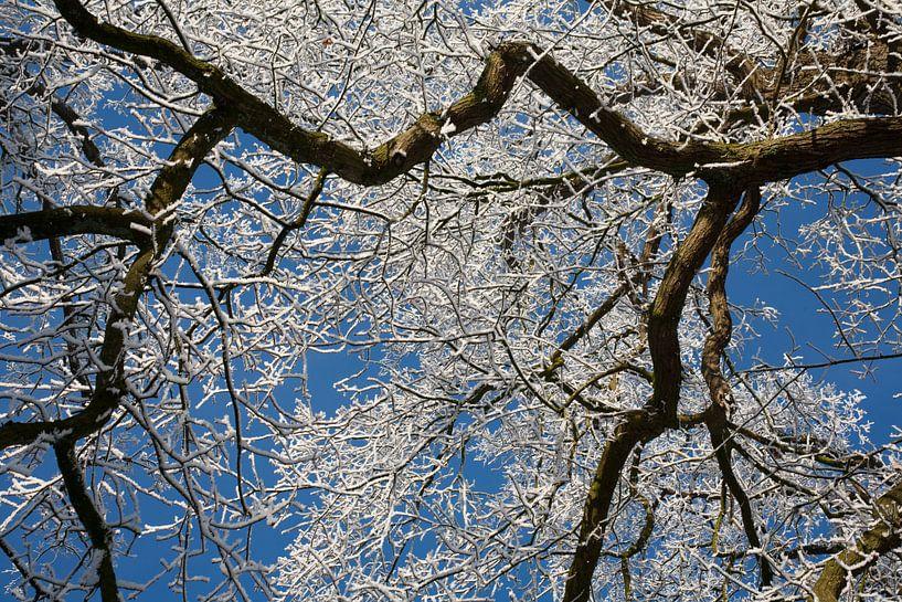 Heldere winterdag van Jim van Iterson