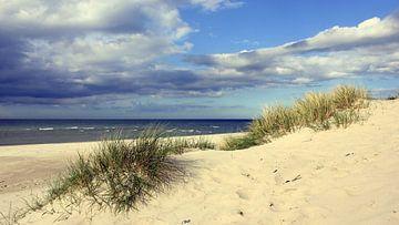 Dünen im April van Ostsee Bilder