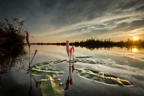 Waterplant von Johan Vet