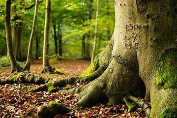 Liefdes initialen in het bos van Heiloo tijdens Herfst. van Dorus Marchal
