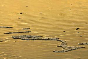 Oranje zee op Texel