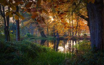 Schönste Zeit des Jahres in der Natur von Mart Houtman