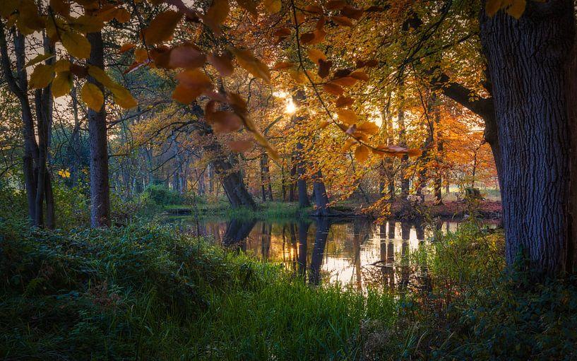 Mooiste tijd van het jaar in de natuur van Mart Houtman