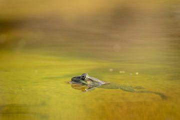 Frosch im Wasser von Tanja van Beuningen