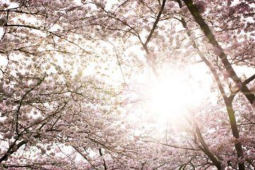 Bloesem lente in Nederland van shanine Roosingh