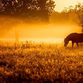 Paard in de mist bij vroege morgen van Jan Linskens
