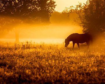 Pferde im Nebel am frühen Morgen von Jan Linskens