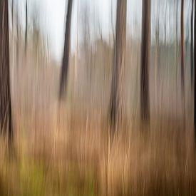 Bomen fantasie van Bruno Hermans