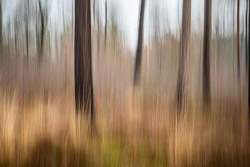 Phantasie der Bäume von Bruno Hermans