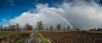 Sunshine and rain sur Lex Schulte