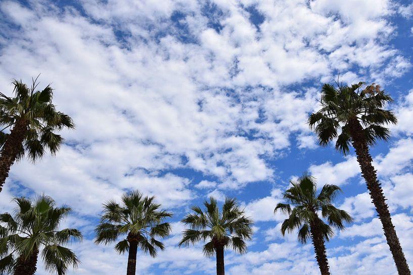 Palmen von Markus Jerko