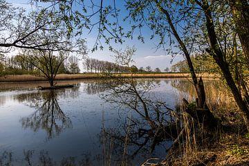 Biesbosch-Reflexion im Wasser von Carin IJpelaar