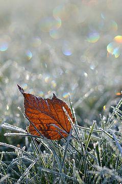 Frostig  van zwergl 0611
