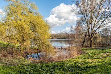 Uitbottende treurwilg aan de rand van een meer van Ruud Morijn