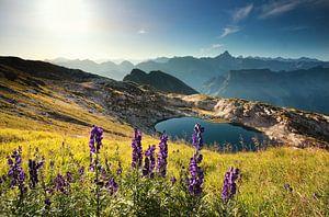 wildflowers on mountain near alpine lake