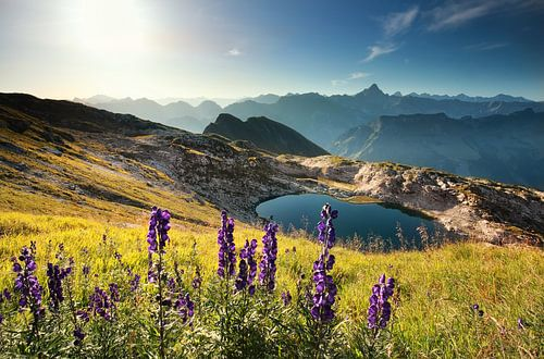 wildflowers on mountain near alpine lake van Olha Rohulya