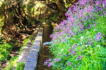 Wasserkanal und Blumen auf Madeira von Leo Schindzielorz
