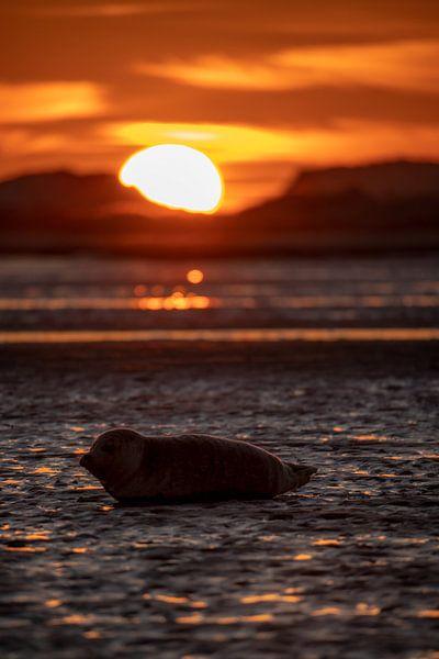 Zeehondje op het strand van Marjolein van Roosmalen