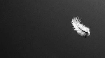 Light As A Feather van Carmen Fotografie
