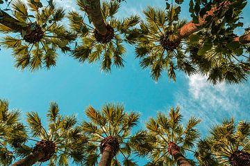 Palmen von Marleen Kuijpers
