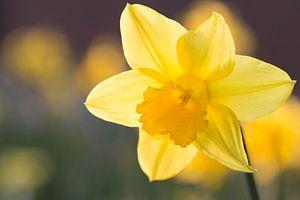 Narcis van Kimberly van Aalten