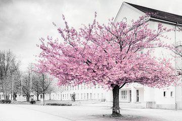 Chemnitz sierlijke kersenbloesem van Daniela Beyer