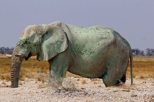 Surrealistische groene olifant, wildlife Afrika van