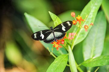 vlinder butterfly von Jamy Danen