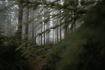Nebliger geheimnisvoller Wald von Eke Salomé