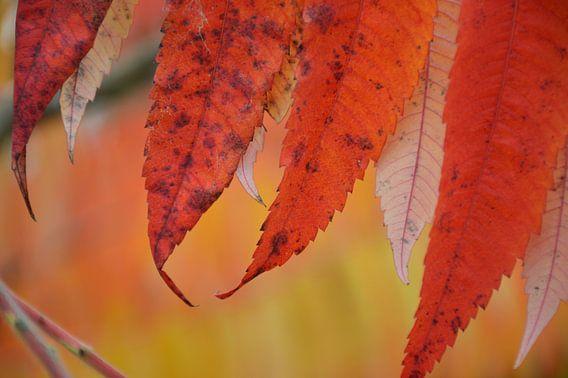 herfstkleuren van Fraukje Vonk