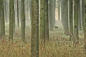"""""""In het bos"""" van Niek Goossen"""