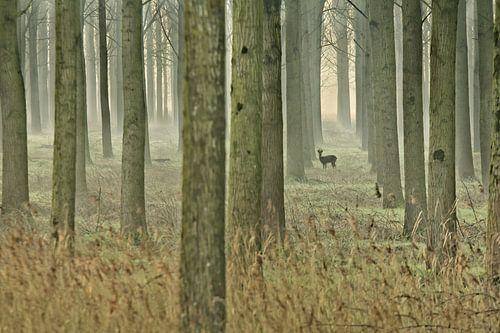 """""""In het bos"""" von Niek Goossen"""
