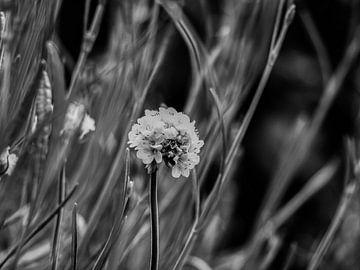 Englisches Gras von Martijn Wit