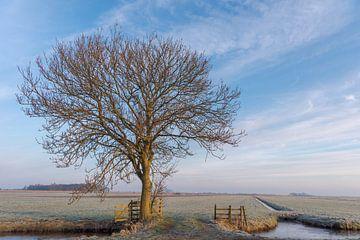 Baum in gefrorener Polderlandschaft mit warmem Morgenlicht von Beeldbank Alblasserwaard