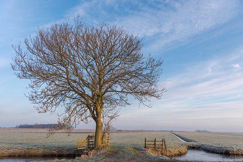 Winter in de Alblasserwaard: boom in bevroren polderlandschap met warm ochtendlicht.